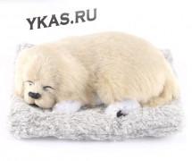 Собака на торпеду лежащая на коврике бежево-белая