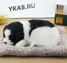 Собака на торпеду лежащая на коврике черно-белая